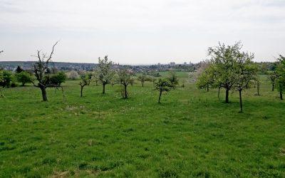 Von Steeden rund um Homburg